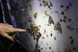 Daniel Janzen points to a large moth at a lamp station in the dry tropical forest in the ACG.